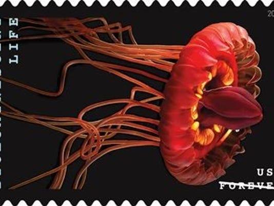 636530937929385729-crown-jellyfish-by-Edie-Widder.jpg