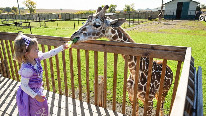 Princess Natalie Ziwicki, 3, Foley, feeds lettuce to Prince the giraffe during Boo at the Zoo on Saturday, Oct. 7, at Hemker Park and Zoo in Freeport.