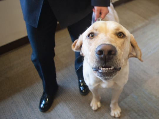 Camden County Police introduced K-9 Peyton with the