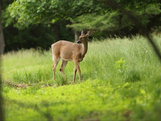 Janet Piszar of Millburn is not in favor of deer hunts.