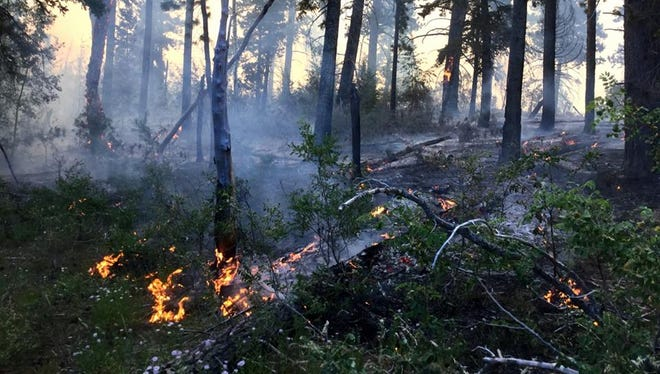 Fire officials said the fire has spread along the forest floor, kept there by wetting rains.
