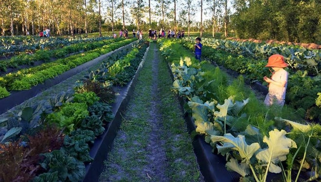 "Kai-Kai Farm in Indiantown grows more than 50 varieties of vegetables. Kai kai means ""gathering food,"" a phrase the owners heard while on a sailing trip in the Solomon Islands."
