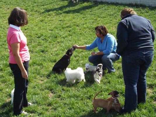 Amish aim to restore dog breeding rep