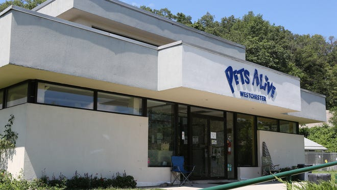 A view of Pets Alive in Elmsford.