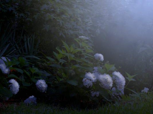 Moonlight on the Garden