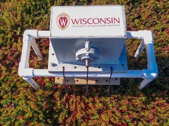 A prototype device designed by UWÐMadison engineers counts cranberries on the bush by analyzing microwaves bounced off the ground and through the plants.