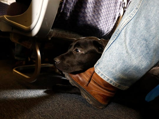 A service dog named Orlando rests on the foot of his trainer, John Reddan, while sitting in a United Airlines plane at Newark Liberty International Airport during a training exercise.