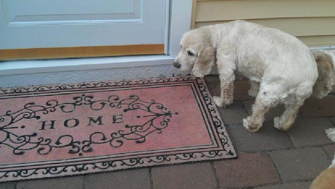 Sammy, pictured at his new home in Middletown, died Monday.