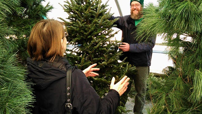Horticulturist Ted Knights displays a Christmas tree at Forever Green garden center in North Liberty. He says customers often search for the perfect tree right up to closing time on Dec. 24.