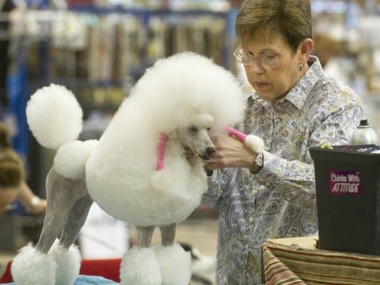 Nellie Doneva/Reporter-News Joann Neal grooms her miniature