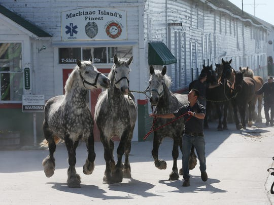 Horses are lead to their stables after arriving on the island by ferry on May 6, 2015 at Mackinac Island.