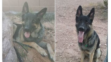 German shepherd tasered by St. George police to be released after special review