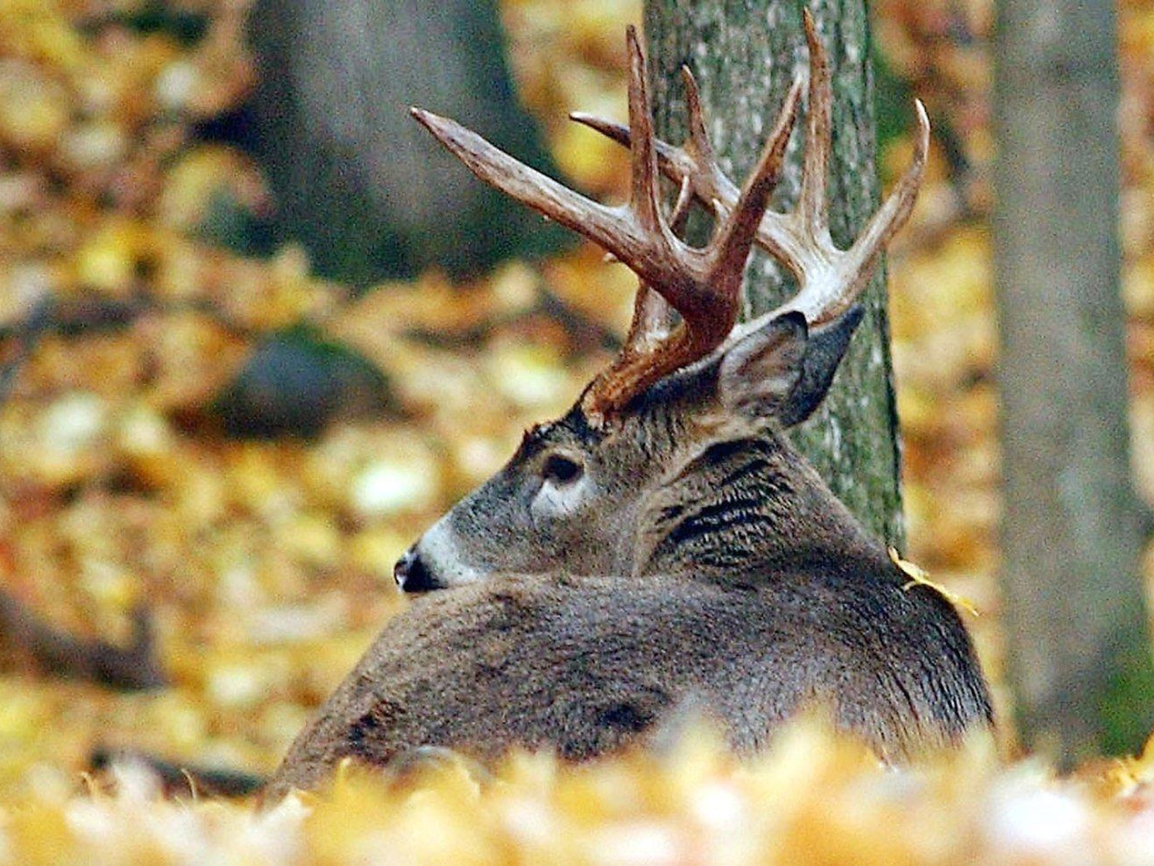 Hunters will be looking for big bucks Monday on the