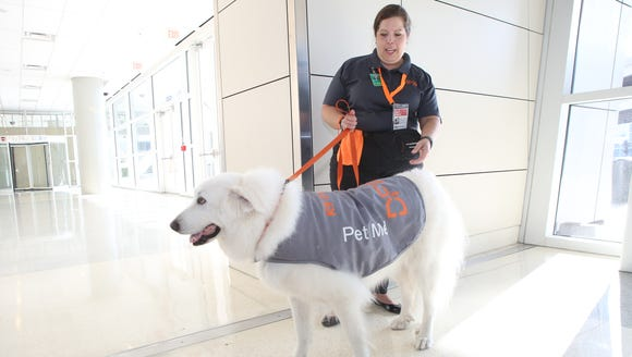 The dogs are on duty to bring comfort to passengers