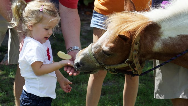 Children will get hands-on experience with horses during Horse Interaction Day at the Saddlewood Horse Club of Cape Coral on Saturday.