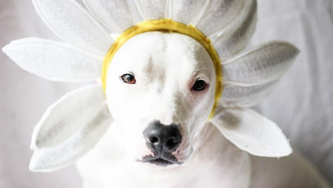 Lita put up with this headdress for her photo.