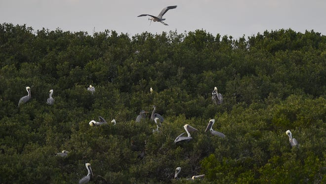 The Environmental Learning Center's Pelican Island Pontoon Boat Excursion,Thursday, Dec. 29, 2016 in northern Indian River County.