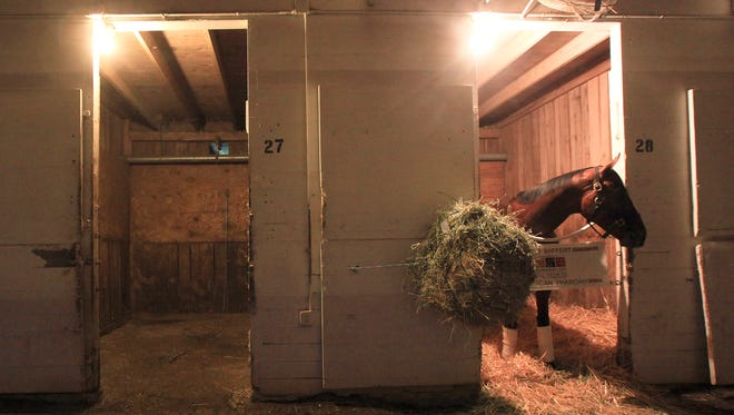 American Pharoah hangs out in the barn before dawn on the backside of Churchill Downs.  Pharoah left Churchill just after dawn for the trip back to California.June 18, 2015