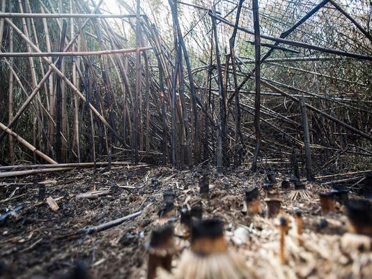 Charred bamboo remains after a fire Monday night on the grounds of the East Coast Exotic Animal Rescue in Fairfield. It's the second fire at the rescue in less than a year. (Shane Dunlap - The Evening Sun )