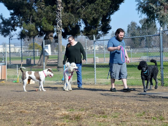 Mia, a Pitbull Terrier mix played with other dogs Tuesday at Plaza Park's dog park.