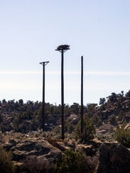 An osprey platform with a nest is pictured on Thursday