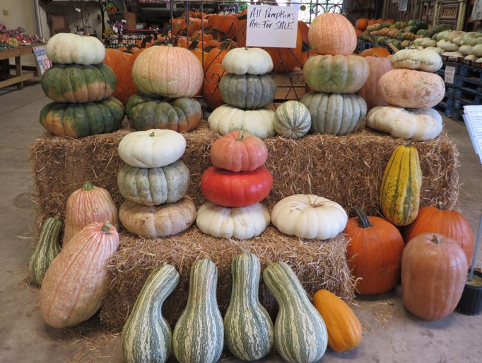 Heirloom and Decorative pumpkins.