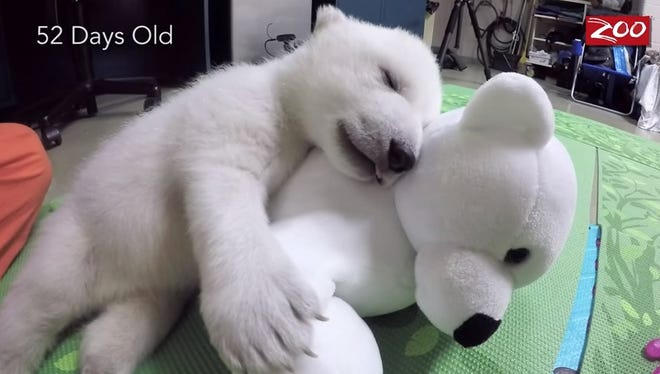 Nora cuddles with a stuffed polar bear at the Columbus Zoo.