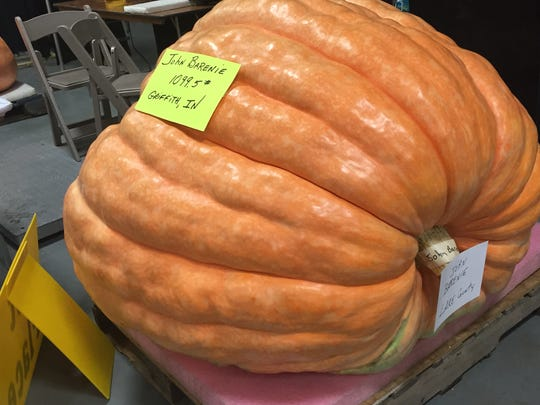 The winner of the giant pumpkin contest at the 2015 Indiana State Fair weighs 1,099.5 pounds.
