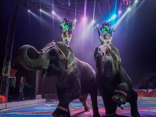 Circus Saurus