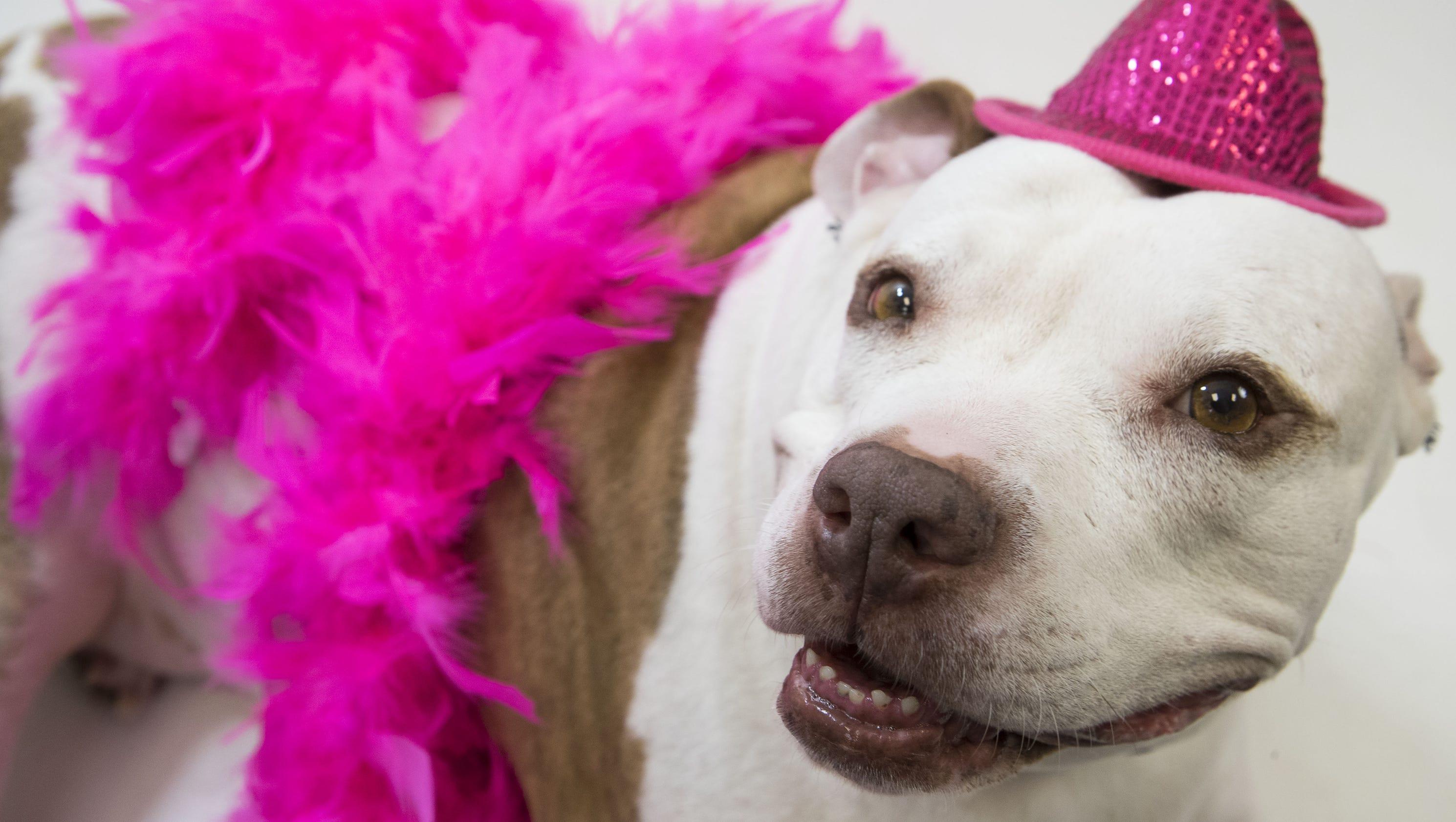Senior Dogs For Adoption In Az