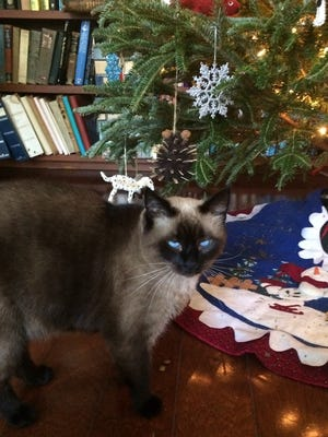 Eric contemplates attacking the Christmas tree.