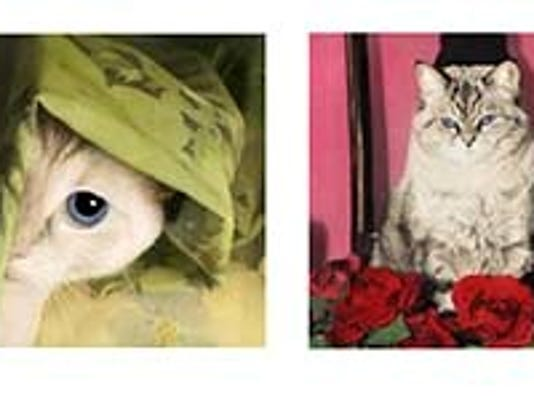 cat-portraits.jpg