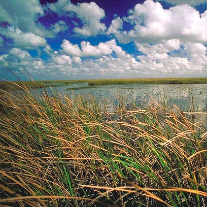 A view of the Everglades.