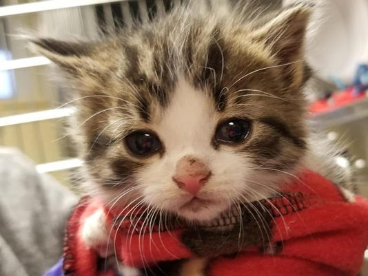 636615700116482192-Pawfficer-Badges-at-1-Month-of-Age.jpg