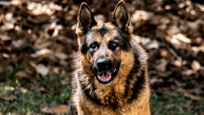 Greenville County Sheriff's Office K-9 Kroc retired in March 2017 after nearly 11 years of service.