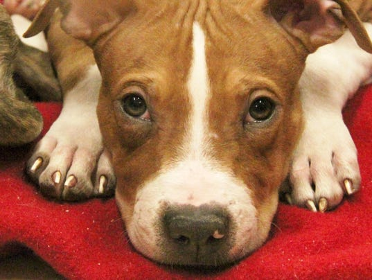 New York State animal shelters
