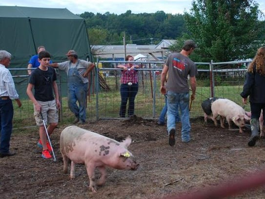 Livestock shows are also a big part of the Houston