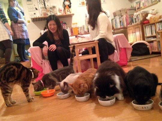 At the Hapineko (Happy Cat) cafe in Tokyo, customers pay about $13 an hour to hang out with cats. The place is kept spotless and odor-free by several attendants.