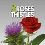 Roses and Thistles