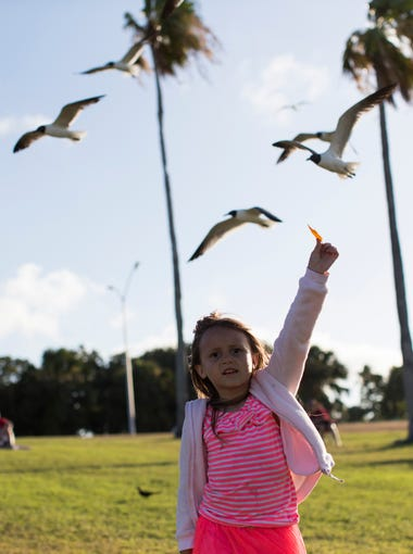Eliza Hendrickson ,5, feeds the sea gulls before the Bay Jammin' Concert on Thursday June 14, 2018, at Cole Park Amphitheater.