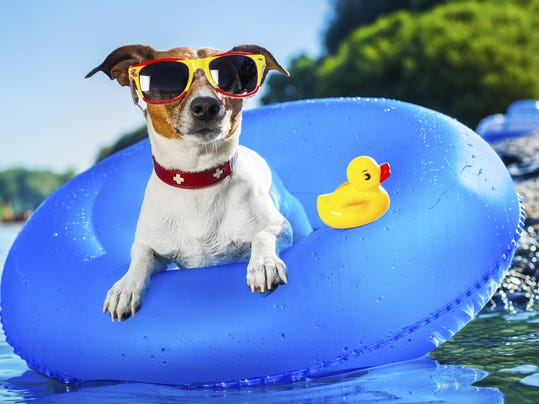 Small Dogs That Can Swim