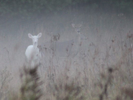Shoot this deer only with your camera