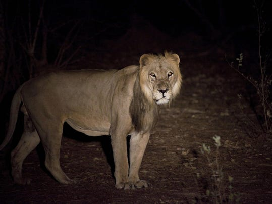 West Africa Lions