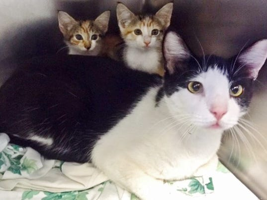 636409095514565367-daddy-and-kittens.jpg