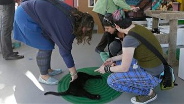A number of women play and photograph cats at the Cat Town Cafe in Oakland, Calif. Following similar cafe concepts in Asia & Europe, the cafe has become America's first permanent feline-friendly coffee shop. Cafe customers pay to pet cute kitties while sipping on tea or expresso drinks. It allows customers, who may not be able to have cats in their own homes, to enjoy the benefits of furry friends for short times without the responsibility. The animals come from a partnership with a local animal shelter and are also available for adoption. This may just be the beginning of this country's cat cafe craze as others plan on opening soon in Seattle, Portland, San Diego and Denver.