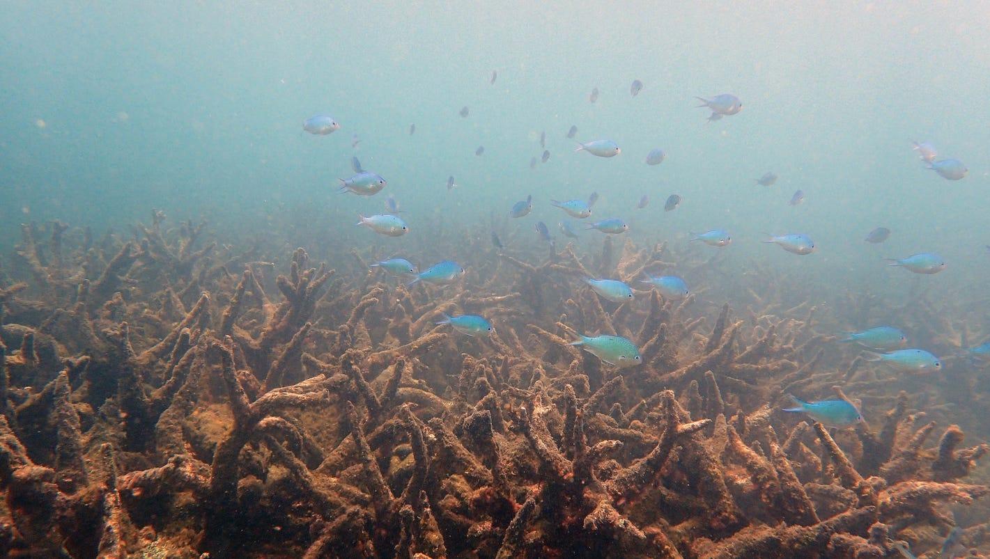 Global warming is making ocean heat waves longer, slowing down underwater currents
