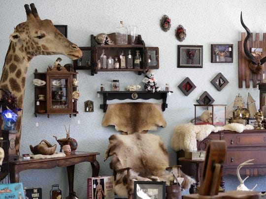The Forty Three Skulls oddities shop is located inside