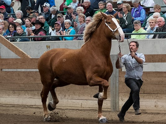 635806950224606185-Draft-Horses-2