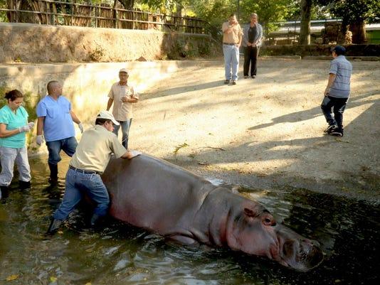 EPA EL SALVADOR ANIMALS HUM ANIMALS SLV