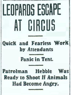 The July 2, 1908 Richmond Evening Item headlined the discomforting news that leopards were on the loose the day before!